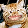 Smiley gratuit chat 133816